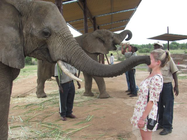 elephant-trunk-girls-face